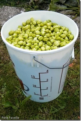 barrel-of-hops-1
